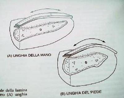 anatomia in schema
