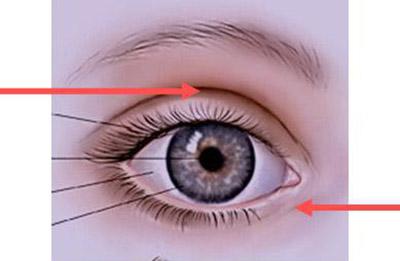 occhi in schema